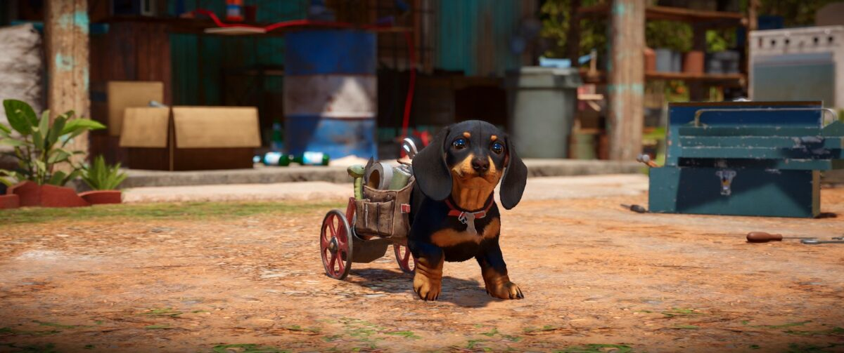 A weenie dog with a little cart with wheels attached to his back to help him move around freely. He carries crafting supplies and a plastic toy in the form of a snake. He looks cute and ready for anything. His name is Chorizo.